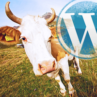 wordpress-cow